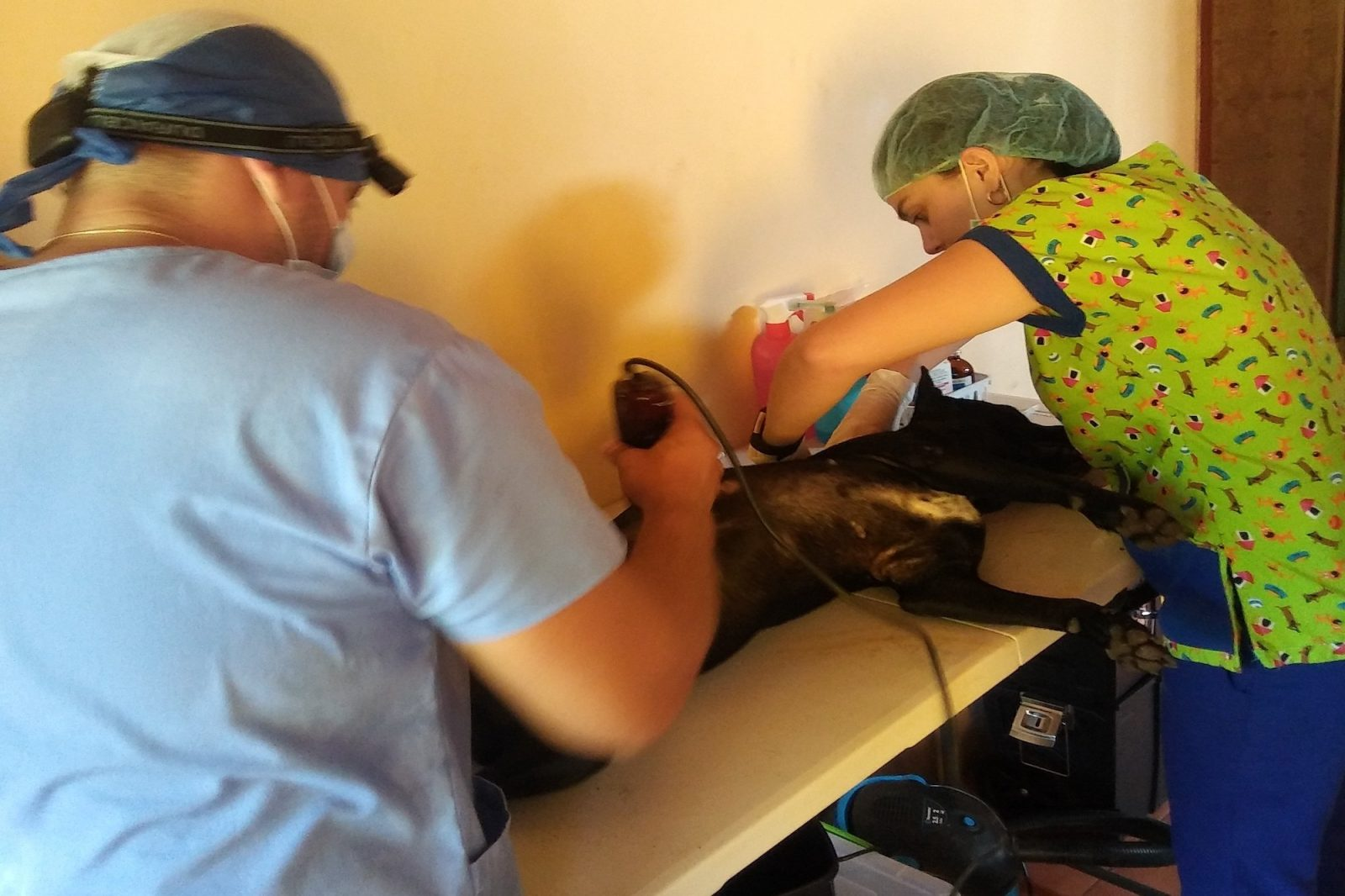 veterinarians performing castration/spay and neuter surgery on a dog
